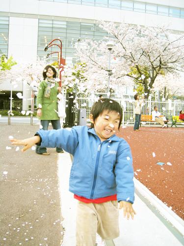 みなとみらいの桜吹雪