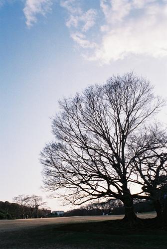 根岸森林公園の木