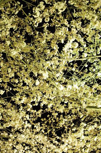 三渓園夜桜