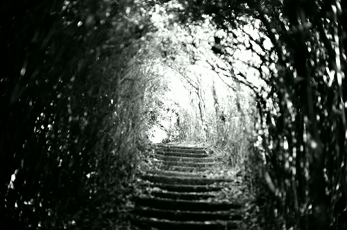 森のトンネル