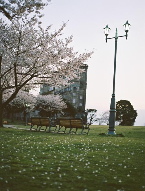 根岸森林公園 競馬場 桜