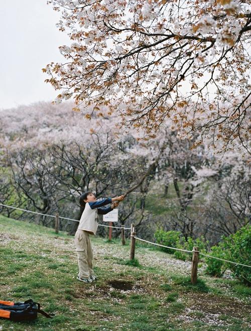 桜を散らす王子