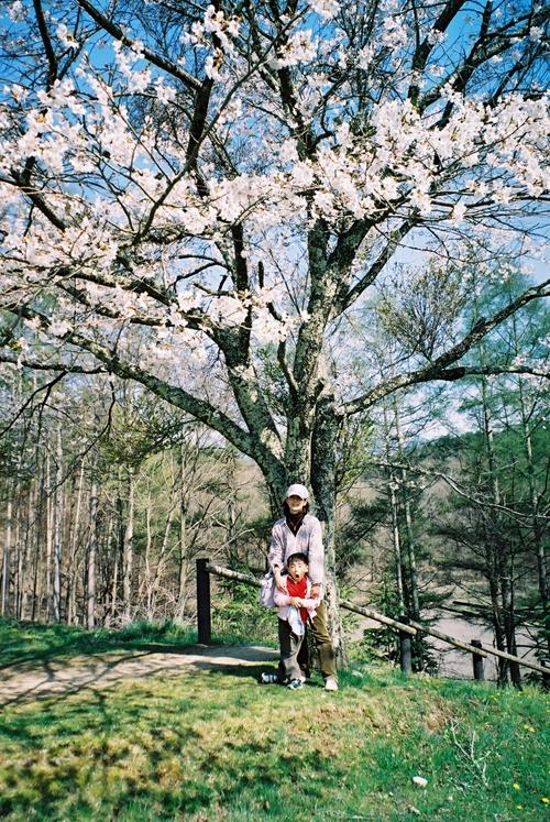 尖石遺跡の桜の木の下で