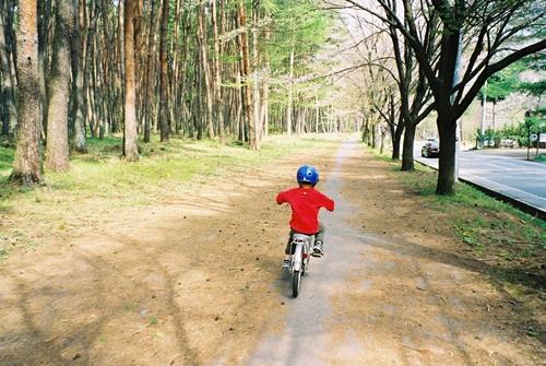 自転車の レンタル自転車 横浜駅 : ... 愛しい妻 家族写真 横浜 印旛村