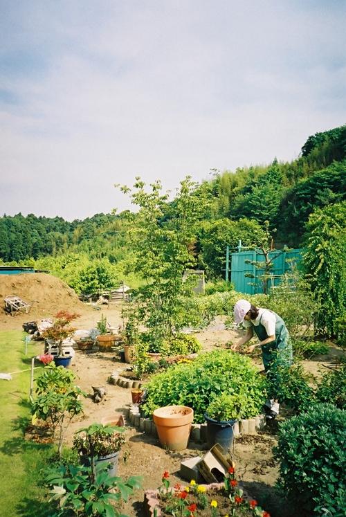 印旛村 庭