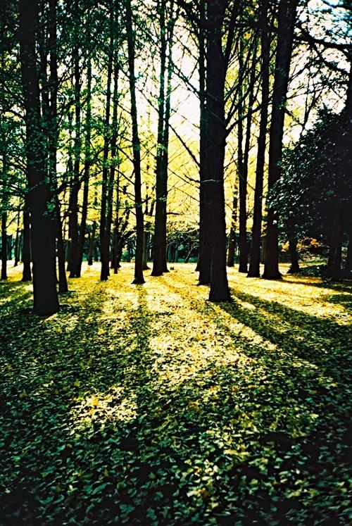 根岸森林公園をクロスプロセス