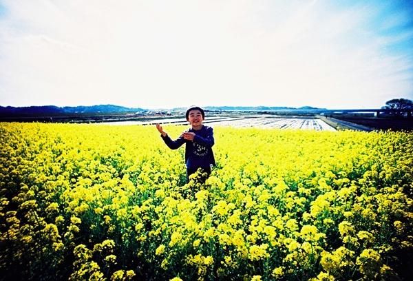 印旛村菜の花畑