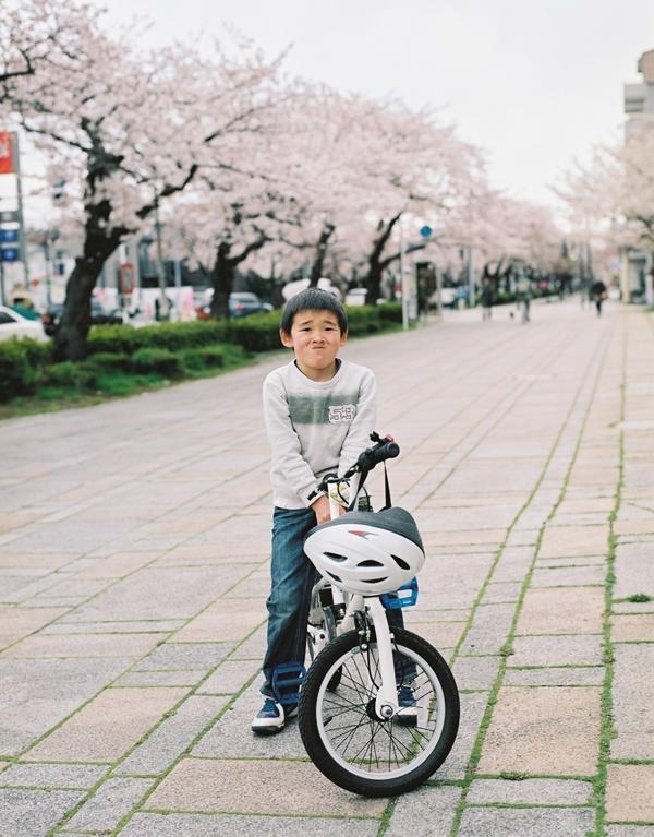 本牧の通りの桜