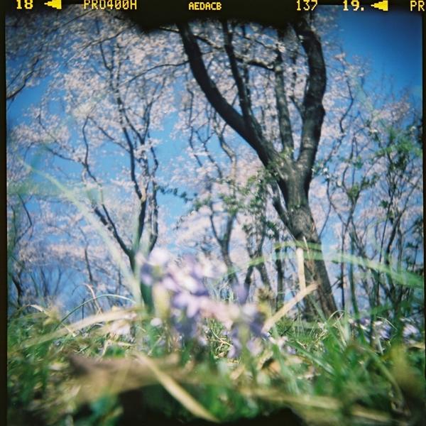 DIANAで桜