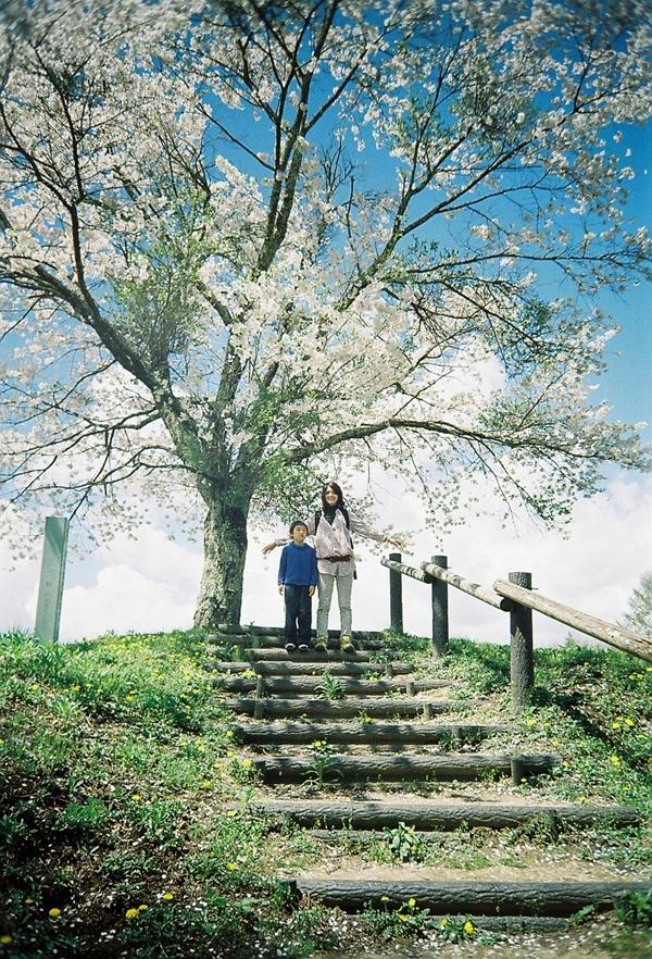 尖り石遺跡の桜