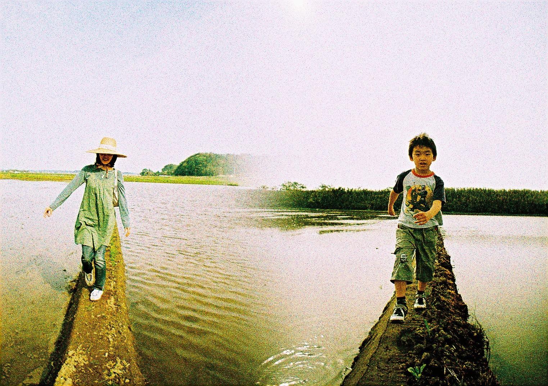 印旛村の田んぼ